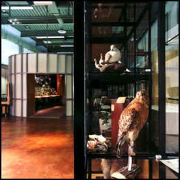 Wilderness Walk exhibition<BR> Chicago Academy of Sciences - 1999